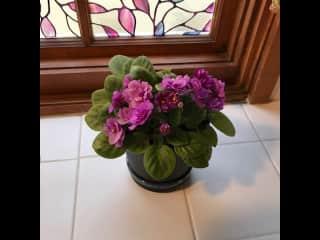 Gotta love those African violets!
