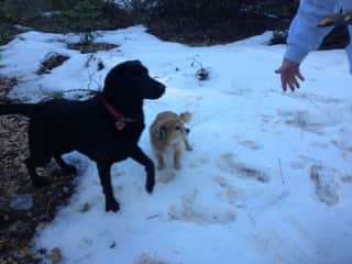 Snow time with dogs.