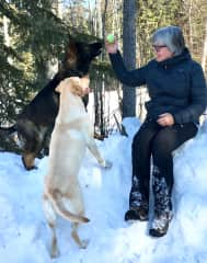 Anyone for a game of wintertime fetch? Nova and Rio, Drayton Valley 2018