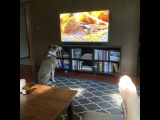 Pip has a few favorite shows in the TV rumpus room