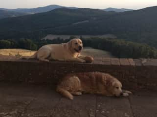 Dogs on terrace