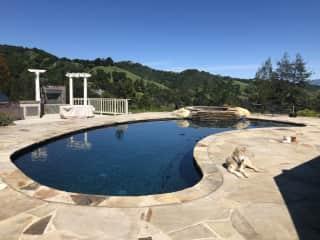 Pool, spa, back yard