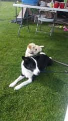 Cato and Bella