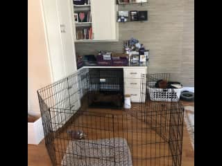Luna has her own crate and pen setup in a corner of the living room