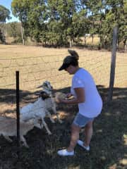 Me feeding resident goats at another holiday park stay