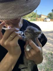A kitten we rescued in Sardinia
