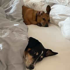 Buster and Stella enjoying the weekend.  Time to sleep in!