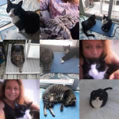 I had the pleasure to take care of Mr. Butters and Norman in Dupont Circle, Washington, DC. Both cats were great and I had the pleasure of taking care of them 3x in the past year. They are now enjoying their life basking in the sun in Indonesia.