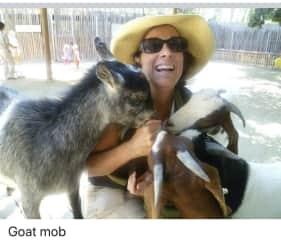 Goat mob