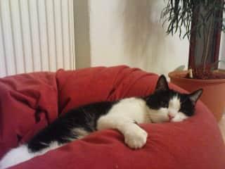 Juli, Dianas cat and biggest love