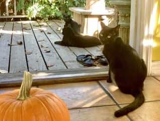 """Another extremely rare photo of Rocky with her """"sisters"""". Rocky always eats outside. Luna & Ozy always eat inside."""