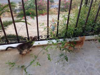 These kittens we cared for in Greece were obsessed with Alex and playfully watched him garden.