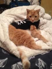 My kitty of 13 years, Fry