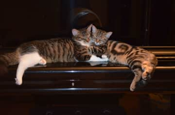 Two minxes dozing