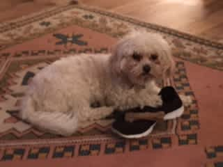 """""""I do like secretly licking shoes - but never chewing!"""""""