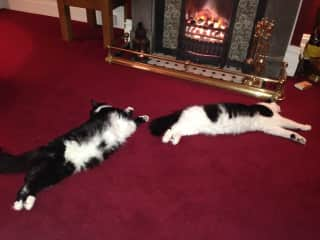 Finn and Oscar getting cosy by the fire in England