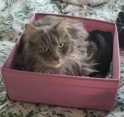 Lulu loves boxes