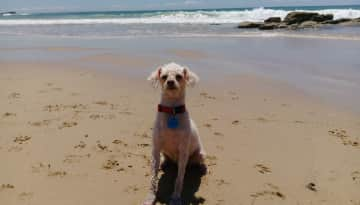 Molly at the local beach, a regular outing.