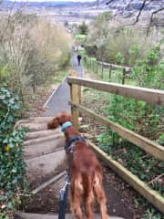 Peaches is an Irish Setter who stole my heart in Bath, England. So much energy and personality to match...pure joy!