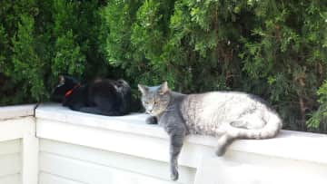 Cole and Dusty enjoying the sun on the patio.