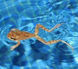 A better swimmer than I