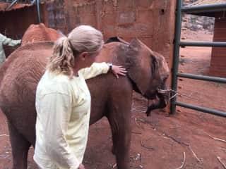 Visiting orphaned elephants in Kenya.