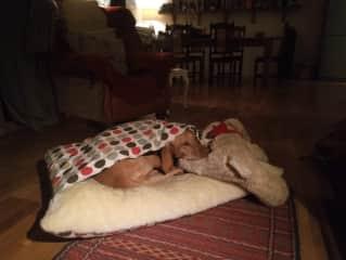 Snug as a bug with Big Ted!