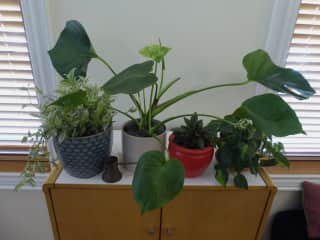 We have lots of plants.