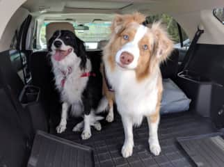 Took these two to a state forest for a nice walk. They loved it. I snapped this before letting them out of the car.