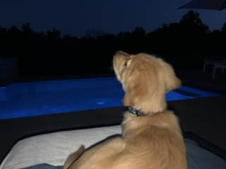 Roxy looking at the moon
