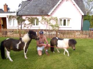 Suffolk U.K. Billy walk the ponies