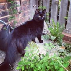 My former cat Eddie again