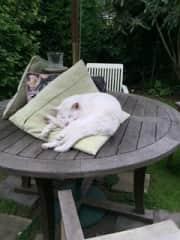 Jasper's afternoon nap in the garden