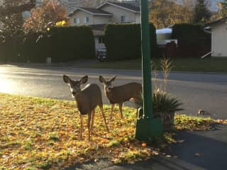 Welcome guests; my front yard