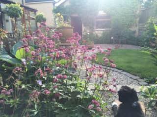 Ben, observing his garden!