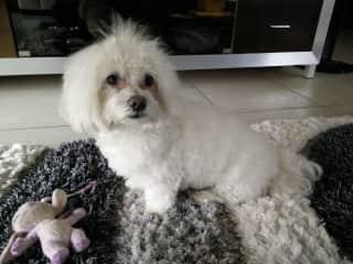 Pickachu! Eden's familiy dog, whom we love!