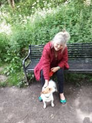 Walking a neighbour's Jack Russell, July 2020