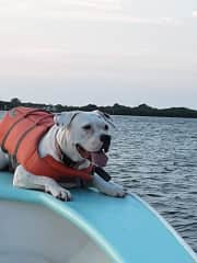 Cleo loves the boat. We try to bring her along as much as possible.