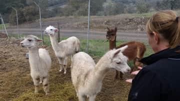 House/farm sit: off grid alpaca farm in Spain