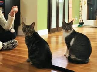 2017-12 - Massachusetts cat-sitting 1