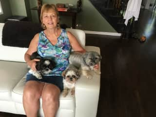 Caring for my sister's 3 dogs