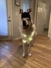 Happy pup excited to share the Holidays with you!