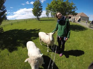 Visiting a farm in New Zealand