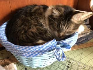 Ryan...Kitty-in-a-basket!