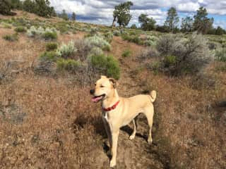 Tucker the Wonderdog