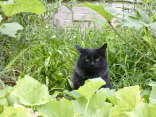 Ahab in his favorite place, the garden