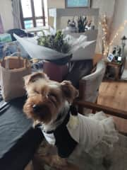 Cookie when she was our Bridesmaid
