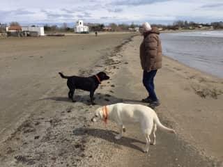 Christine with Oz and Kato, Labradors