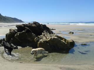 Dogwalk at the beach