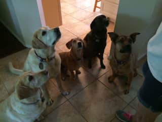 All the dog cousins waiting for a cookie.
